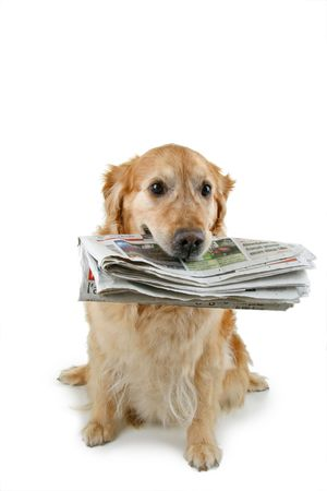 dog and newspaper Stock Photo