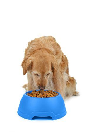 dog eating: dog eating Stock Photo