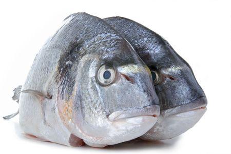 sea bream: fish, sea bream Stock Photo