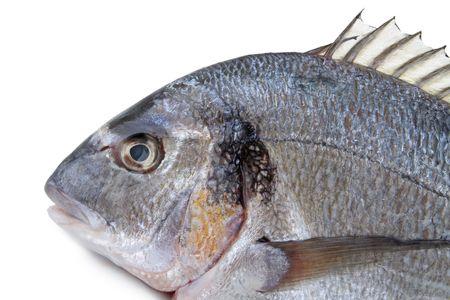 sea bream: fish,sea bream Stock Photo