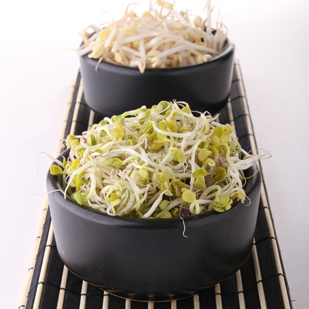soy bean sprout Stock Photo - 10333634