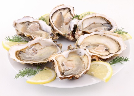 plate of oyster on white background photo