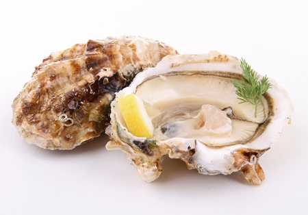 oyster shell: isolated oyster