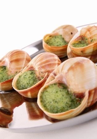 bourgogne: isolated bourgogne snail