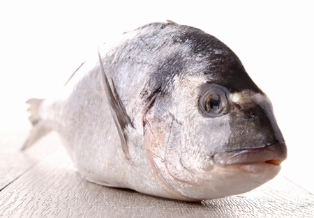 raw sea bream photo
