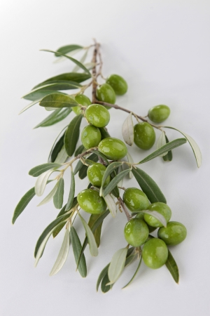branch of green olives photo