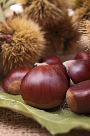 maroni: close up on chestnut