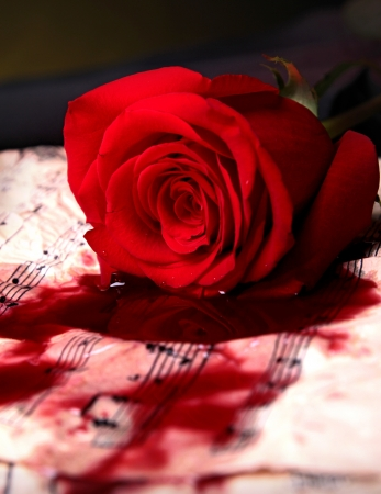 hearts and roses: love song