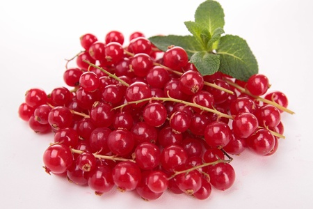 isolated red currant photo