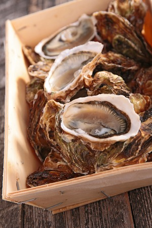 epicure: oyster