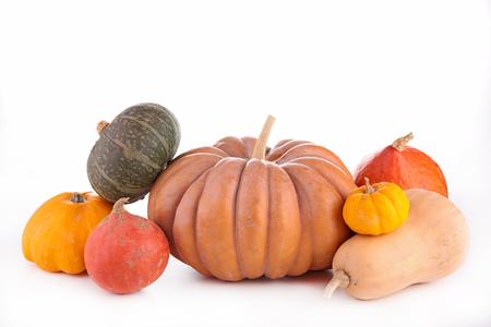 assorted pumpkin Stock Photo