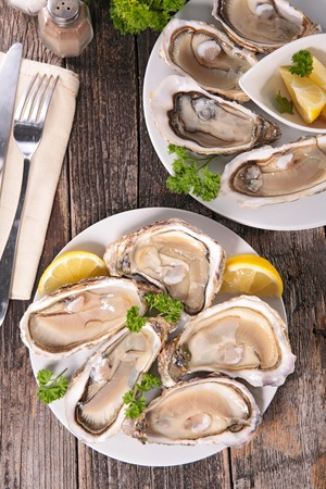 oyster: oysters