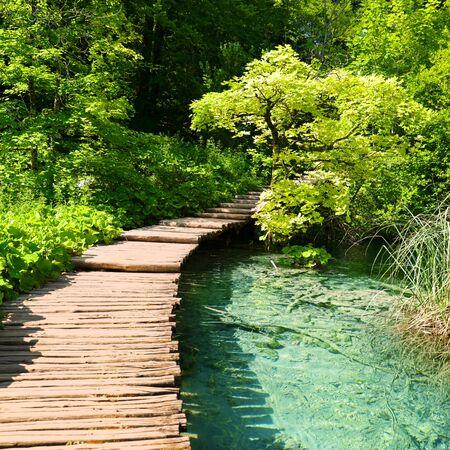 Holzbrücke, türkisfarbener Fluss und grüner Wildwald Standard-Bild