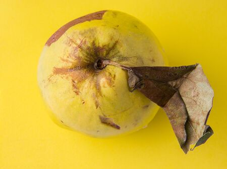 ugly fruit pomelo on a yellow background. close-up