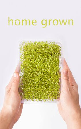 container with micro greens in male hands on a white background