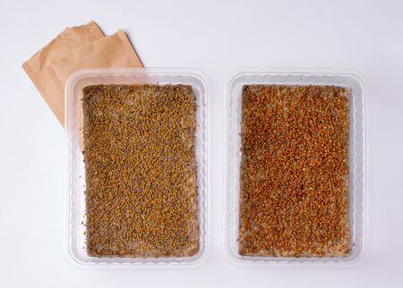 microgreen seeds in two containers on a white background Reklamní fotografie