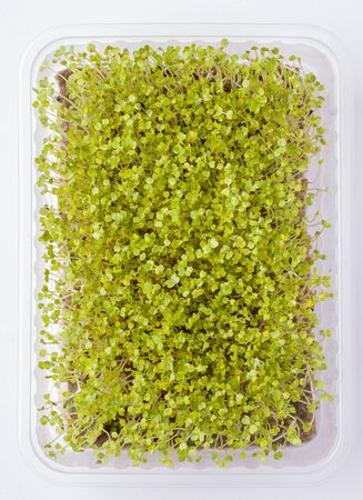 fresh micro greens in a container on a white background. Close-up