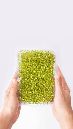super food microgreen in male hands on a white background