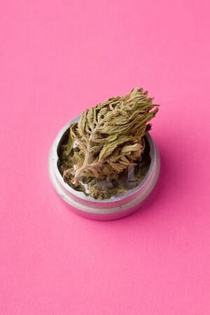 sprig of marijuana on a pink background. have copy space