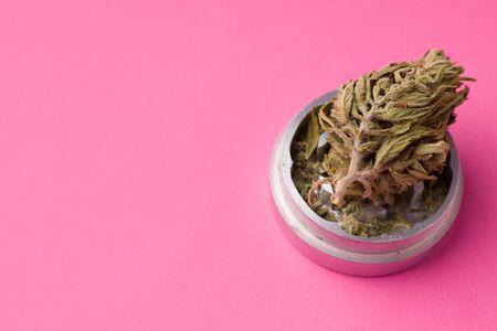 whole marijuana dried on a pink background copy space. minimalist style