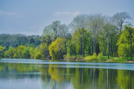 greenwood: Trees with spring foliage on the bank of the river on a sunny day Stock Photo