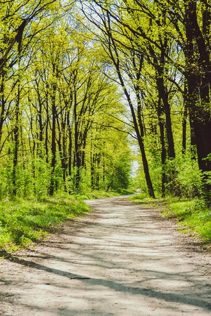 foliar: road in the woods among the trees with bright green leaves, filter, bright sun Stock Photo