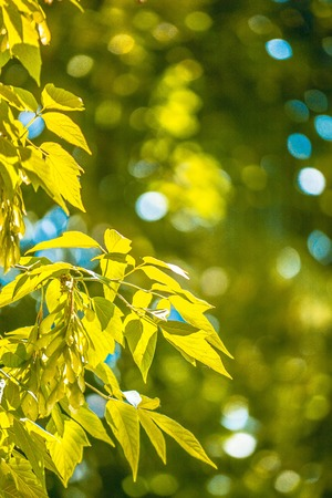 sun lit: tender leaves lit by the sun with blurred green background, filter Stock Photo