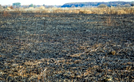 scorched: scorched field of dry grass, day,  filter