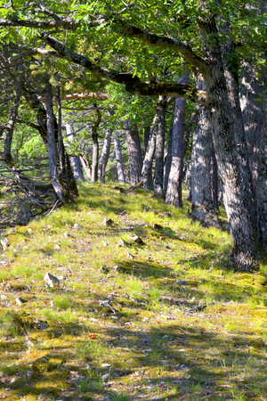 clay stone road in jungle: trail, road, path in the woods of the Crimean mountains, rocks lie on the grass grows green grass