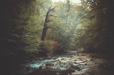 chippy: mountain stream and a dry tree on the shore filter Stock Photo