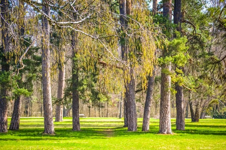 piny: pine park on a sunny day filter, spring Summer Stock Photo