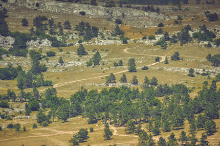 vastness: rocky field with trees  on top of Mount Ai-Petri, Crimea, with filter Stock Photo