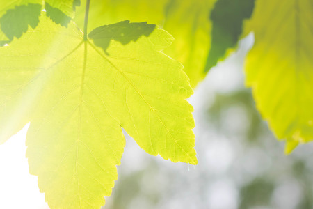 vealy: Spring leaf close-up with sunlight, filter effect Stock Photo
