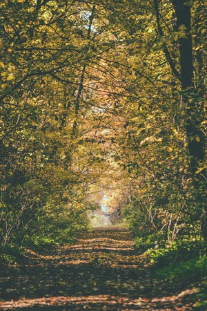 dense forest: Road in the dense forest in the fall with a dark filter
