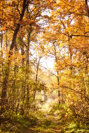 foliar: beautiful branch with leaves and road Autumn in the forest, filter Stock Photo