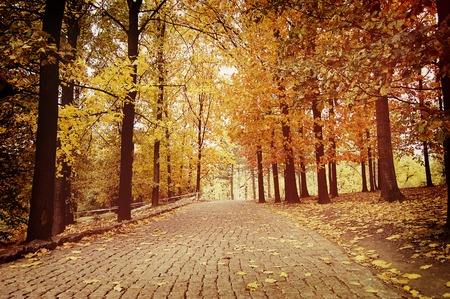 foliar: Road paved with paving stones in autumn park, path for walking on the sides where trees with yellow leaves Stock Photo