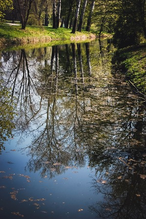 reflection in the water of trees poplar with Spring leaves