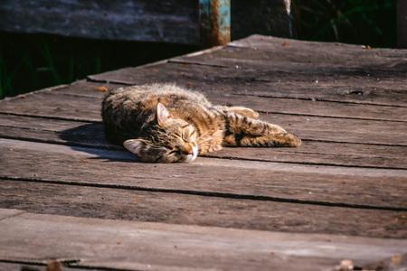 wooden floors: Cat on the wooden floor sleeping in the sun. Copy space. Stock Photo