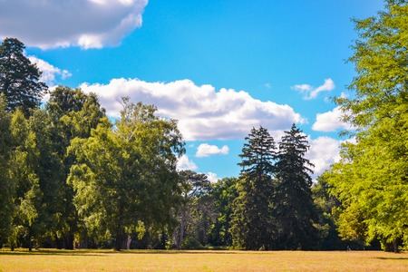 Bright Field meadow trees pine trees sky clouds sunny day summer copy space