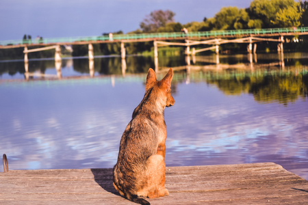 The dog is waiting at the dock Stock Photo