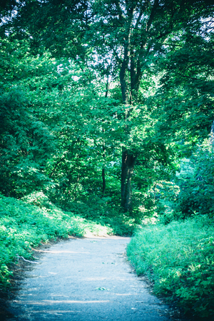 Road in the forest park in the spring and the sunlight. Natural background. Environment, ecology