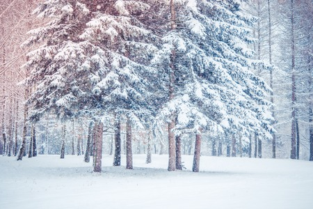 Tree pine spruce in magic forest winter day. Snow forest. Natural New Year Christmas rembling scenery winter background. Fantastic Fairytale Magical Landscape View Christmas Tree Foto de archivo