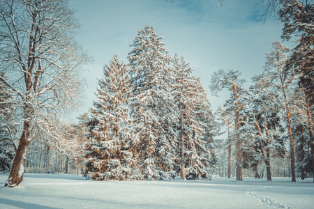 Tree pine spruce in magic forest winter day. Snow forest. Natural New Year Christmas rembling scenery winter background. Fantastic Fairytale Magical Landscape View Christmas Tree 스톡 콘텐츠