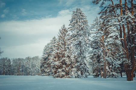 Tree pine spruce in magic forest winter day. Snow forest. Natural New Year Christmas rembling scenery winter background. Fantastic Fairytale Magical Landscape View Christmas Tree Stock Photo
