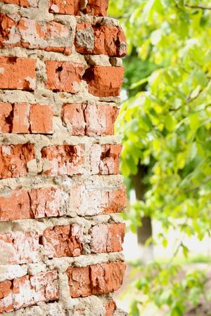 vertical brick wall half blurred green leaves 版權商用圖片