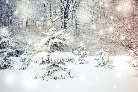 Forest trees covered snow at night in winter. Fantastic Fairytale Magical Landscape. Christmas Winter New Year Scenery. Snowfall falling snowflakes blizzard snowstorm. Backdrop