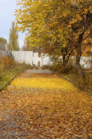 asphalt road strewn with yellow leaves with a white fence
