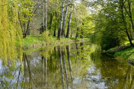 high spring trees grow near the lake