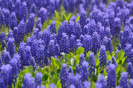 background many of purple flowers with green grass Standard-Bild - 167237055