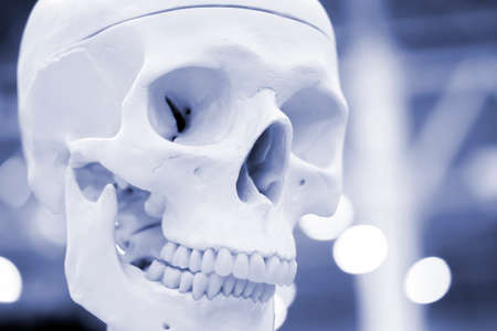 White layout human skull closeup, medical exhibit. Blue gray color Standard-Bild